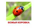 «Блокбастер XII клеевая ловушка от тараканов»