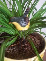 Датчик влажности - Птица EWBD001.